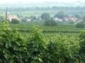 06.07.10 Pfalz02